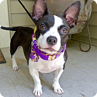 Adopt A Pet :: Momma dog - Baton Rouge, LA