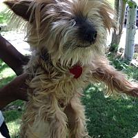 Adopt A Pet :: Emma - West Valley, UT