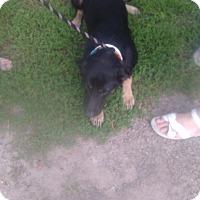 Adopt A Pet :: Bayou - Kendall, NY