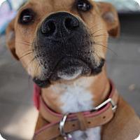 Adopt A Pet :: Gracie - Pontiac, MI