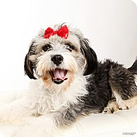 Adopt A Pet :: Sandy - Omaha, NE