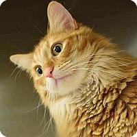 Adopt A Pet :: Pumpkin - Sierra Vista, AZ