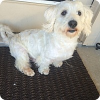 Adopt A Pet :: Olaf - MCKINNEY, TX