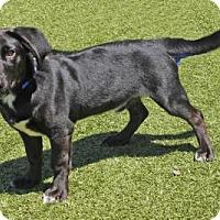 Adopt A Pet :: Hanson - Wichita, KS