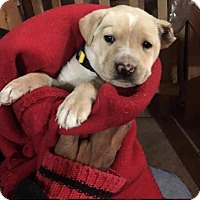 Adopt A Pet :: Denver - Mesa, AZ