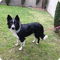 Adopt A Pet :: CABO - San Pedro, CA