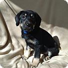 Adopt A Pet :: Adrianna-pending adoption