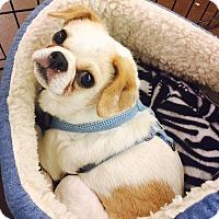 Adopt A Pet :: Keba - Mary Esther, FL