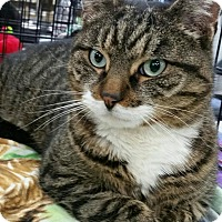 Adopt A Pet :: Tiger - Staten Island, NY