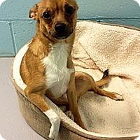 Adopt A Pet :: Flynn - Muskegon, MI