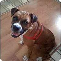 Adopt A Pet :: Jenna - Thomasville, GA