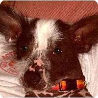 Adopt A Pet :: Syd-NJ - Mays Landing, NJ