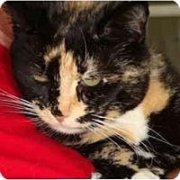 Adopt A Pet :: Lilly - Jenkintown, PA