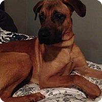Adopt A Pet :: Bubba - Hamilton, ON