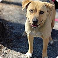Adopt A Pet :: Penelope - Tinton Falls, NJ