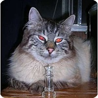 Adopt A Pet :: Zeus - Yakima, WA