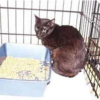 Adopt A Pet :: Seltie - Syracuse, NY