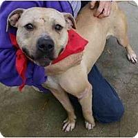 Adopt A Pet :: Claire - Auburn, CA