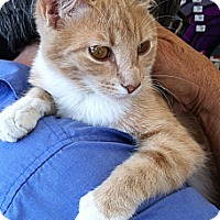 Adopt A Pet :: Mila - Santa Monica, CA