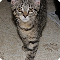 Adopt A Pet :: Haller 4 - Plainville, MA