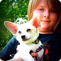 Adopt A Pet :: Mickey - Wappingers, NY