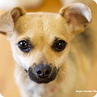 Adopt A Pet :: Effie - Knoxville, TN