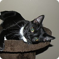 Adopt A Pet :: Gio - Turnersville, NJ