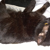 Adopt A Pet :: Onyia - Ravenna, TX
