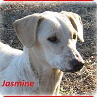 Adopt A Pet :: Jasmine-Adoption Pending - Marlborough, MA
