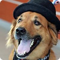 Adopt A Pet :: Rory - Boston, MA