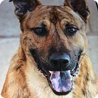 Adopt A Pet :: TIGER VON TIGGER - Los Angeles, CA