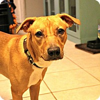 Adopt A Pet :: Sassy - Grand Rapids, MI