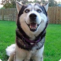 Adopt A Pet :: Balto - Fargo, ND