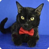 Adopt A Pet :: ASTRO - Norman, OK