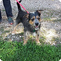 Terrier (Unknown Type, Small) Mix Dog for adoption in Lake Odessa, Michigan - Kiwi