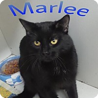 Adopt A Pet :: Marlee - Crown Point, IN