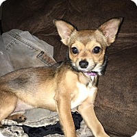 Adopt A Pet :: Trixie (adoption pending) - Matawan, NJ