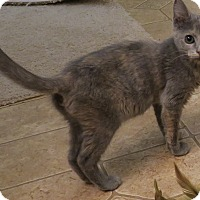 Adopt A Pet :: Friskie - Bedford, VA
