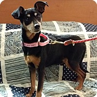 Adopt A Pet :: MP5 Salvadore - Winfield, PA