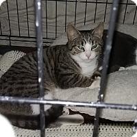 Adopt A Pet :: Mella - Cedar Springs, MI