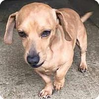 Adopt A Pet :: Franklin - Centerville, GA