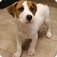 Adopt A Pet :: Herbie - Burbank, OH