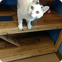 Adopt A Pet :: Mr. Bigglesworth - Brookings, SD
