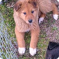 Adopt A Pet :: Kanga - Harrisburgh, PA