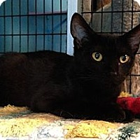 Adopt A Pet :: Rex - Deerfield Beach, FL
