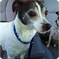 Adopt A Pet :: Gertie - Glen Burnie, MD
