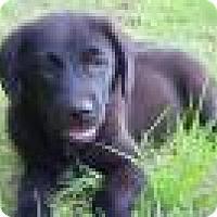 Adopt A Pet :: Boca - Philadelphia, PA