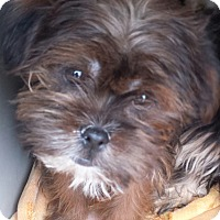 Adopt A Pet :: Xander - Algonquin, IL