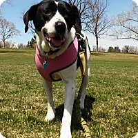 Adopt A Pet :: Bonnie - Ft. Collins, CO