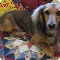 Adopt A Pet :: Roscoe - Conroe, TX
